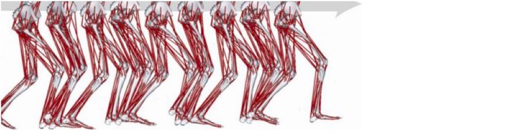 Musculoskeletal model from the OpenSim software platform walking in a crouch gait pattern common in cerebral palsy.