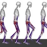 Crouch gait simulations